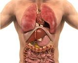 Understanding Your Organs